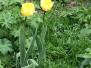 Цветник. Весна